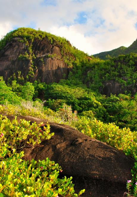 Discover The Seychelles On Your Honeymoon