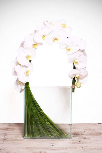 أزهار موز - دبي