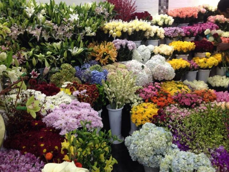 زهرة الربيع - الرياض
