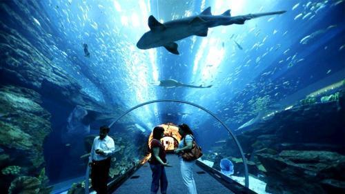 عالم ما تحت الماء في جزيرة لنكاوي