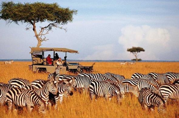 محمية ماساي مارا الوطنية، كينيا