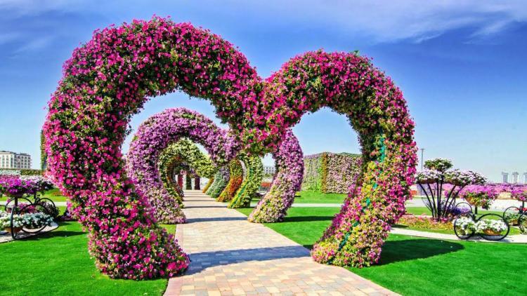 خلفية جميلة في حديقة الزهور بدبي